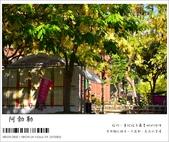 阿勃勒,台南賞花地點公開,初夏最金黃耀眼的綻放:nEO_IMG_20130602 1401.jpg