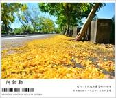 阿勃勒,台南賞花地點公開,初夏最金黃耀眼的綻放:nEO_IMG_20130602 297.jpg