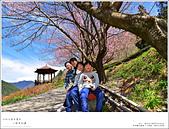 2016武陵賞櫻:nEO_IMG_n6.jpg