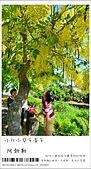 阿勃勒,台南賞花地點公開,初夏最金黃耀眼的綻放:nEO_IMG_20130602 176.jpg