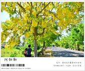 阿勃勒,台南賞花地點公開,初夏最金黃耀眼的綻放:nEO_IMG_20130602 099.jpg