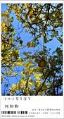 阿勃勒,台南賞花地點公開,初夏最金黃耀眼的綻放:nEO_IMG_20130602 1403.jpg