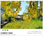 阿勃勒,台南賞花地點公開,初夏最金黃耀眼的綻放:nEO_IMG_20130602 388.jpg
