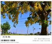 阿勃勒,台南賞花地點公開,初夏最金黃耀眼的綻放:nEO_IMG_20130602 207.jpg