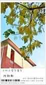 阿勃勒,台南賞花地點公開,初夏最金黃耀眼的綻放:nEO_IMG_20130602 1407.jpg