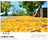 阿勃勒,台南賞花地點公開,初夏最金黃耀眼的綻放:nEO_IMG_20130602 299.jpg