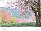 2016武陵賞櫻:nEO_IMG_353.jpg