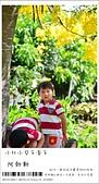 阿勃勒,台南賞花地點公開,初夏最金黃耀眼的綻放:nEO_IMG_20130602 255.jpg