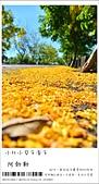 阿勃勒,台南賞花地點公開,初夏最金黃耀眼的綻放:nEO_IMG_20130602 301.jpg