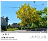 阿勃勒,台南賞花地點公開,初夏最金黃耀眼的綻放:nEO_IMG_20130602 058.jpg