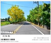 阿勃勒,台南賞花地點公開,初夏最金黃耀眼的綻放:nEO_IMG_20130602 062.jpg