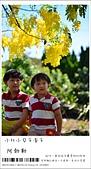阿勃勒,台南賞花地點公開,初夏最金黃耀眼的綻放:nEO_IMG_20130602 259.jpg