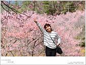 2016武陵賞櫻:nEO_IMG_303.jpg