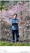 2016武陵賞櫻:nEO_IMG_323.jpg