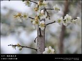 賞梅。臺中新社 梅林親水岸:nEO_IMG_20120115 011.jpg