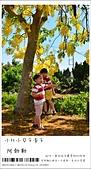 阿勃勒,台南賞花地點公開,初夏最金黃耀眼的綻放:nEO_IMG_20130602 263.jpg