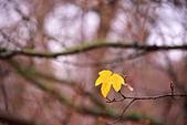 英國 白金漢宮 公園:DSC_0192_調整大小.JPG