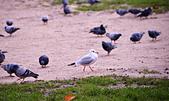 英國 白金漢宮 公園:DSC_0213_調整大小.JPG