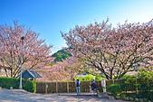 陽明山 橘餐廳 櫻花賞 4.10:DSC_0039_調整大小.JPG