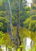 水漾白木林:
