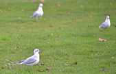 英國 白金漢宮 公園:DSC_0219_調整大小.JPG