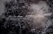 太平山11-5-98:DSC05166.JPG