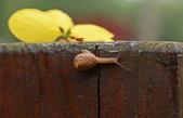 小蝸牛的早晨:DSC_6212_調整大小.JPG