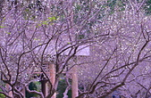 故宮 至德花園:DSC_0724_調整大小.JPG