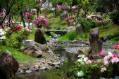 陽明山 櫻花:DSC_0140_調整大小.JPG
