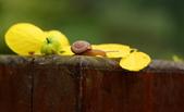 小蝸牛的早晨:DSC_6239_調整大小.JPG