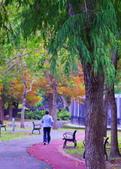 士林官邸 落羽松:DSC_0228_調整大小.JPG