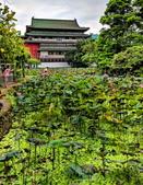 植物園賞荷:IMG_20190522_162038_調整大小.jpg