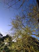 2021 至善公園 梅花林:IMG_20210114_174511_調整大小.jpg