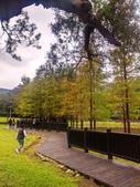 落羽杉季節:IMG_20201212_155336_調整大小.jpg