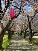 弘前公園 櫻花祭 花見:1F575D71-2B45-47FB-BCEF-25344E730DCF_調整大小.jpg
