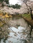 弘前公園 櫻花祭 花見:2BFDE165-84FD-4713-BDE1-94CD0CA2A2A4_調整大小.jpg