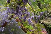 粗坑窯 紫藤:DSC_9785_調整大小.JPG