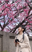探櫻花 平菁街 2020: