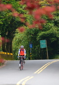陽金公路的 紅槭:DSC_0167_調整大小.JPG