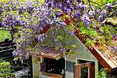 粗坑窯 紫藤:DSC_9789_調整大小.JPG