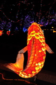 鯉魚燈:DSC_0530_調整大小.JPG