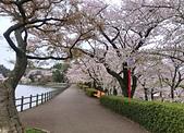 日本櫻花見:8F7A5E62-8694-4A95-A48D-89A5A84EDAD1_調整大小.jpg