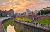 內湖 櫻花 2020:DSC_0821_調整大小.JPG