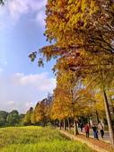 落羽杉季節:IMG_20201213_142236_調整大小.jpg
