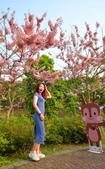 春色滿園 花旗木:DSC_0465_調整大小.JPG