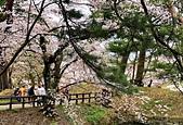 日本櫻花見:14B47592-F975-45C9-81A7-EC28F1AE75C6_調整大小.jpg