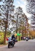 落羽杉季節:IMG_20201213_143637_調整大小.jpg