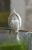 遇見 白鷺鷥:DSC_0349_調整大小.JPG