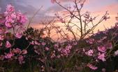 夜幕 陽明山噴泉 賞:DSC_0534_調整大小.JPG