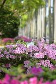 台大杜鵑花節2021:DSC_0358_調整大小.JPG